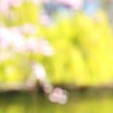 w London parku biali drzewa i okwitnięcia kwiaty naturalni Zdjęcia Royalty Free