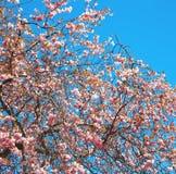 w London parku drzewa i okwitnięcia kwiaty naturalni Zdjęcia Stock