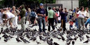 W Londyn żywieniowi gołębie fotografia stock