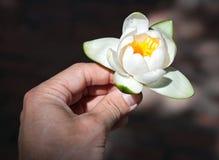 W mężczyzna ręce grążela kwiat Obrazy Stock