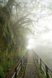 W mglistym lesie ścieżka Zdjęcia Royalty Free