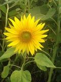 W miasto parka fotografii lata kwiacie obrazy royalty free