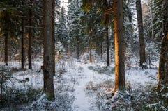 W misterios bożych narodzeniach lasowych obrazy stock