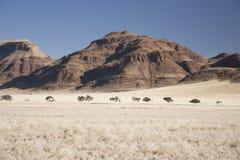 W Namibia sceniczny krajobraz Zdjęcie Stock