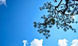 W niebieskie niebo zdjęcia stock
