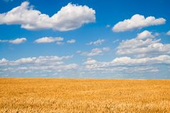 w niebieskiej pola złotą pszenicą Obrazy Royalty Free