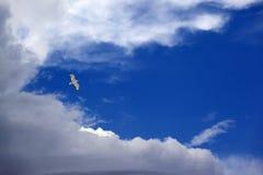 W niebieskim niebie Seagull hover zdjęcie royalty free