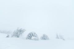 W śniegu jedlinowi drzewa Zdjęcia Stock