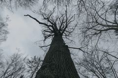 W Niemieckich drewna zdjęcia royalty free