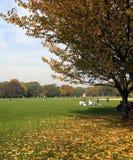 W NYC centrala park Fotografia Royalty Free