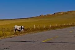 W obszar trawiasty niekończący się droga Zdjęcie Royalty Free