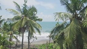 W oceanów drzewek palmowych zwrotników antenę 4k zbiory wideo