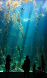 W oceanie mały rekin Obrazy Stock