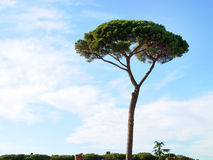 włochy pojedyncze drzewo Zdjęcia Royalty Free