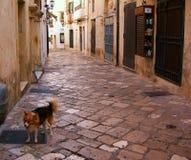 Włochy, Salento: Antyczna ulica Otranto obrazy stock