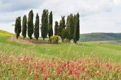 włochy Toskanii Zdjęcia Royalty Free