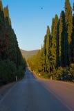 Włochy, Tuscany, Castagneto Carducci, Bolgheri, droga i cypresse, Zdjęcie Royalty Free