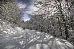 Włochy, Tuscany, park narodowy Casentino lasy, góra Fa Obraz Stock