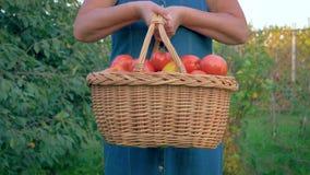 W ogródzie kobieta Podnosi kosz Dojrzali pomidory Pełno I Obniża zbiory