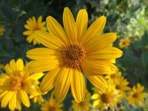 W ogródzie lato kwiat zdjęcie royalty free