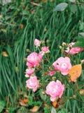 W ogródzie lato kwiaty obrazy stock