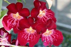 W ogródzie piękni kwiaty zdjęcia royalty free