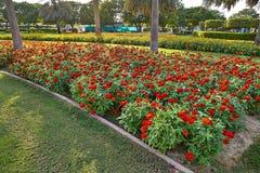 W ogródzie piękni czerwoni kwiaty Zdjęcia Royalty Free