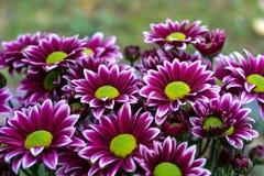 W ogródzie piękni kwiaty Fotografia Stock