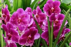 W ogródzie piękni kwiaty Obrazy Royalty Free
