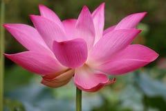 W ogródzie piękni kwiaty Zdjęcia Stock