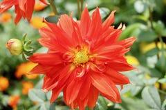 W ogródzie piękni kwiaty Obraz Royalty Free