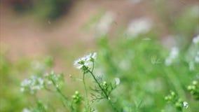 W ogródzie podlewanie rośliny zbiory wideo