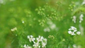 W ogródzie podlewanie rośliny zdjęcie wideo