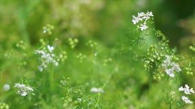 W ogródzie podlewanie rośliny zbiory