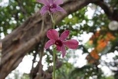 W ogródzie purpurowe orchidee Obrazy Stock