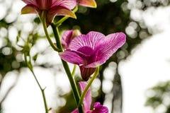 W ogródzie purpurowe orchidee Fotografia Stock