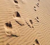 w Oman stara pustynia l i pusta kwartalna abstrakcjonistyczna tekstura Obraz Stock