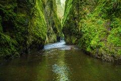 W Oregon Oneonta Wąwóz zdjęcie stock