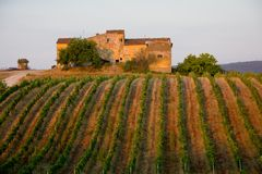 włoski winnica Zdjęcie Royalty Free