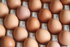 W pakunku zbliżeniu wiele jajka Fotografia Stock