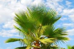 w ' palmie ' Zdjęcia Stock
