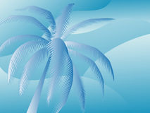 w ' palmie ' Fotografia Stock