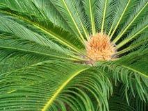 w ' palmie ' Fotografia Royalty Free