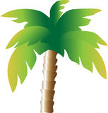 w ' palmie ' Zdjęcie Royalty Free