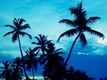 w ' palmie ' zdjęcia royalty free