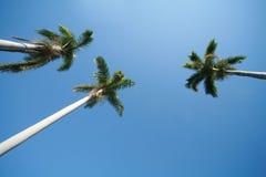 w ' palmie ' zdjęcie stock