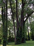 W parku Zdjęcie Stock