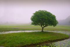 W parku, drzewie i trawie, obraz royalty free