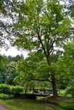 W parku duży drzewo zdjęcie stock