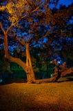 W parku duży drzewo. Zdjęcia Royalty Free